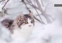 cat in snow cute