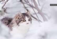 cat in snow cute