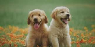 two-cute-puppies